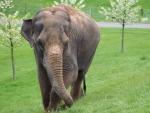 *** Elephant ***