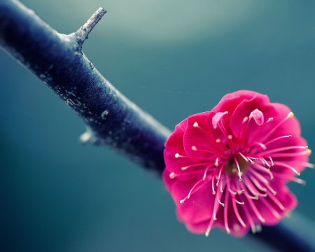 pink flower on branch - flower, nature, branch, pink