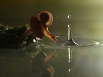 snail and water