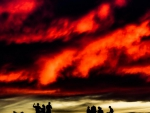 marvelous fiery sky over children silhouettes