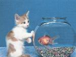 Kitten with goldfish