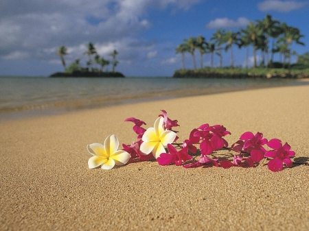 Tropical Plumeria and Orchid Flower Lei Garland on sand beach in Hawaii Polynesia - polynesia, zen, french, palm, atoll, garland, lagoon, beach, oahu, maui, islands, lei, holiday, ocean, pacific, trees, south, water, frangipani, paradise, hawaiian, kauai, plumeria, sea, sand, big, polynesian, blue, hawaii, peace, orchid, luau, island, tropical