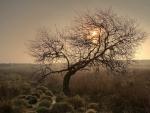 fantastic twisted tree in a misty field