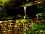 Mushrooms Wood Land