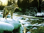 Wolf at the Creek