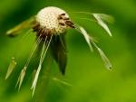 MACRO GRASS HEAD