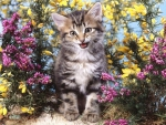 kitty in the flower garden