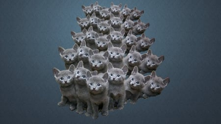 Grey Kittens - grey, kittens, phalanx, Cat