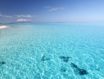 The Perfect Clear Aqua Turquoise Lagoon Sea Ocean on Island Bora Bora Tahiti Polynesia