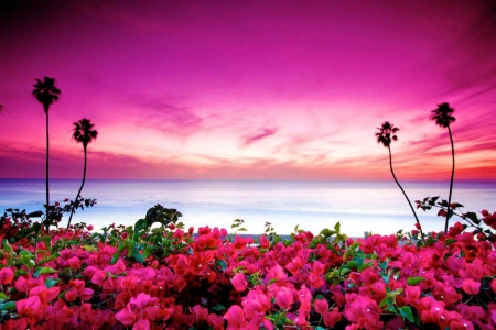 Bougainville - plants, blossoms, sky, pink, sea