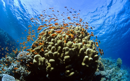 Coral Reef & Group of Fish - Fish, Nature, Underwater, Oceans, Coral Reefs