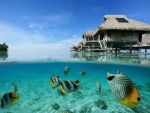 Beautiful underwater coral reef and tropical marine fish on blue lagoon under water villas bungalows in Bora Bora Tahiti Polynesia