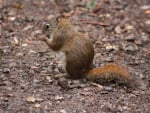 Squirrels on camping ground