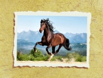 Galloping Andalusian 2