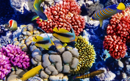 Bright Colorful Fish among the Corals - Fish, Nature, Underwater, Oceans, Coral Reefs