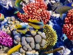 Bright Colorful Fish among the Corals