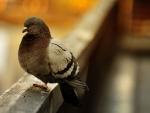 DON'T JUMP - LAST BIRD