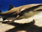meet sharkey