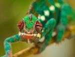 Chameleon - Galaxy S3