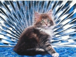 Maine coon cat with fan