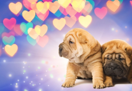 gorgeous puppies with hearts - puppies, beautiful, hearts, animals