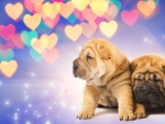 gorgeous puppies with hearts