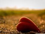 CAST AWAY HEART
