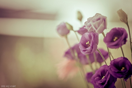 Pastel Purple Flowers Nature Background Wallpapers On