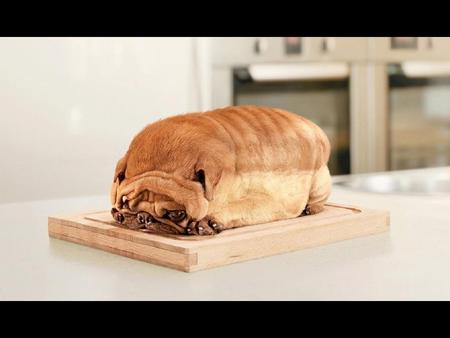 I'm Not a Bread - funny, bread, pug, dog