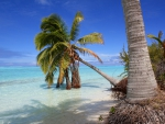 Palm Tree over beach at Aitutaki One Foot Island Cook Islands Polynesia