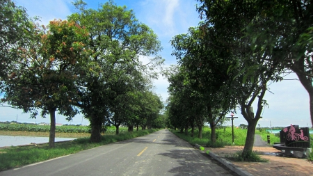 Country Road - cycle path, rural, Country Road, tree