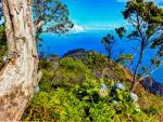 Kalalau Lookout Kauia Hawaii Polynesia