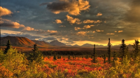 Beautiful Scenery - fall, tundra, trees, sky, clouds, artic, mountains, color, nature, field