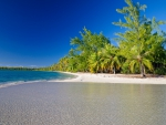 Fakarava Island - Tuamotu atoll islands - french polynesia - white sand beach and palm trees