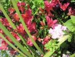 Colorful Flowers a garden makeup 15