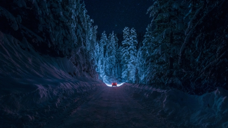 amazing car headlights in a pitched black winter night - forest, car, road, lights, night