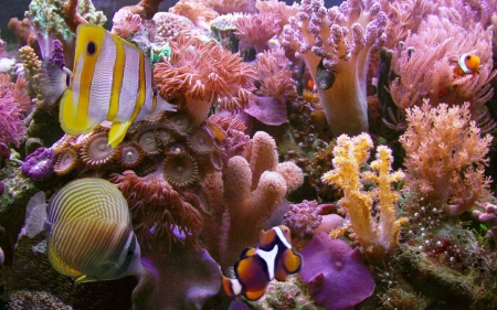 Fish among Pink Corals - Corals, Fish, Pink, Oceans, Underwater, Nature