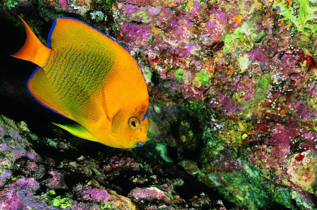 Colorful Corals ~ Colorful Fish - Fish, Nature, Underwater, Oceans, Corals