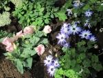 Colorful Flowers a garden makeup 74