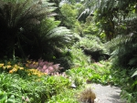 Astoundingly Beautiful Trebah Gardens - Hardy Tropicals in Cornwall, South West United Kingdom
