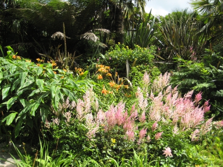 Beautiful astilbes and day lillies in tropical gardens Trebah in Cornwall, England - cornwall, britain, beautiful, tropicals, green, ferns, hardy, flowers, astilbe, botanical, england, lush, uk, trebah, tree, lillies, paradise, united kingdom, flower, rainforest, lily, gardens, day, garden, tropical