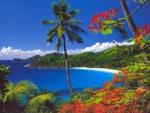 Seychelles dream