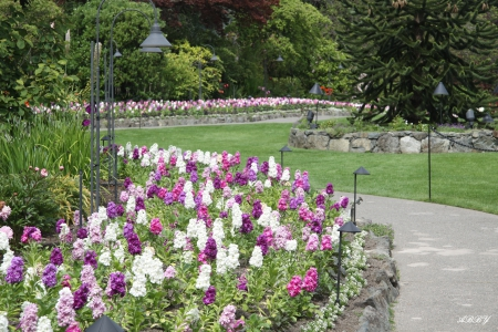 Beautiful garden in Victoria BC - photography, purple, green, Flowers, white