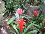 Attractive Flowers at the garden 59