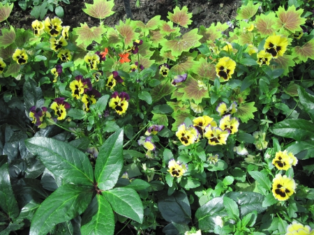 Attractive Flowers at the garden 76 - garden, Flowers, yellow, photography, green