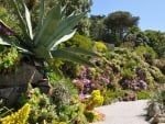 Beautiful Exquisite Hardy Tropicals of Tresco Abbey Gardens Isles of Scilly, Cornwall, England