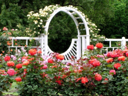 Beautiful Rose Garden Flowers Nature Background Wallpapers On