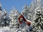 WINTER IN THE SWEDISH MOUNTAINS