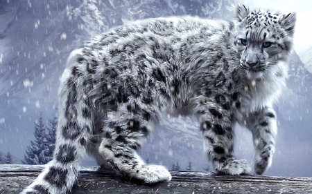 snow leopard - leopard, kitty, cat, picture, animal, winter, mountain, snow, wallpaper, SkyPhoenixX1, kitten, cats, animals