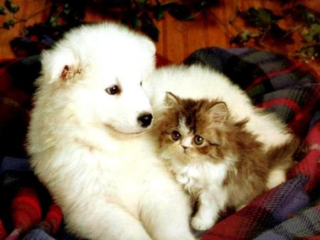 Kitten And Puppy Cats Animals Background Wallpapers On Desktop